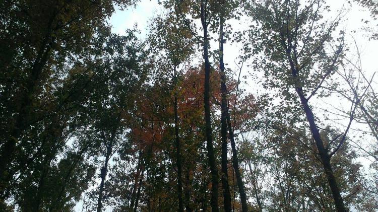 stella-brians-trees1